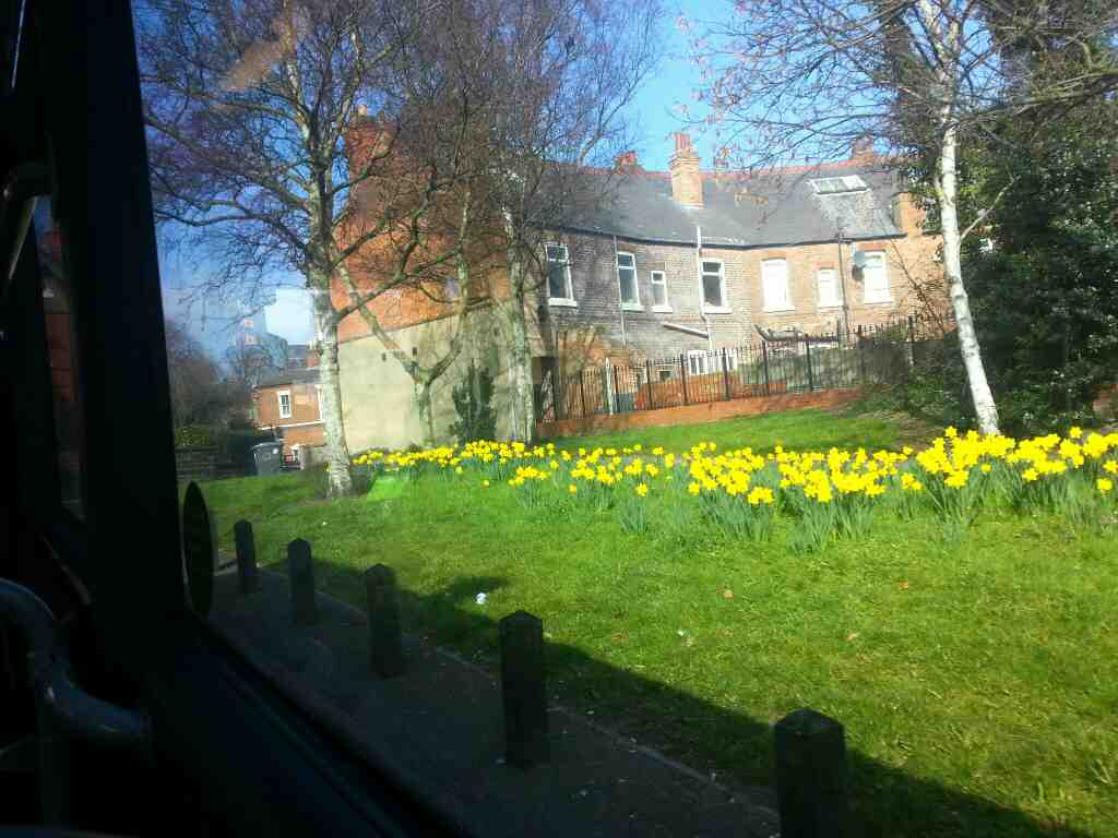 Garden St Derby Daffodils and a spring scene taken from a Transpeak bus