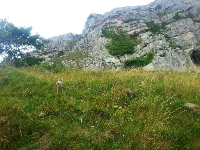 Limestone outcrop Great Orme