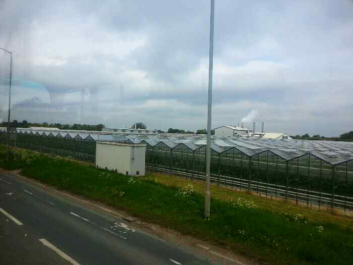 Greenhouses at Woodmansey on Hull Road
