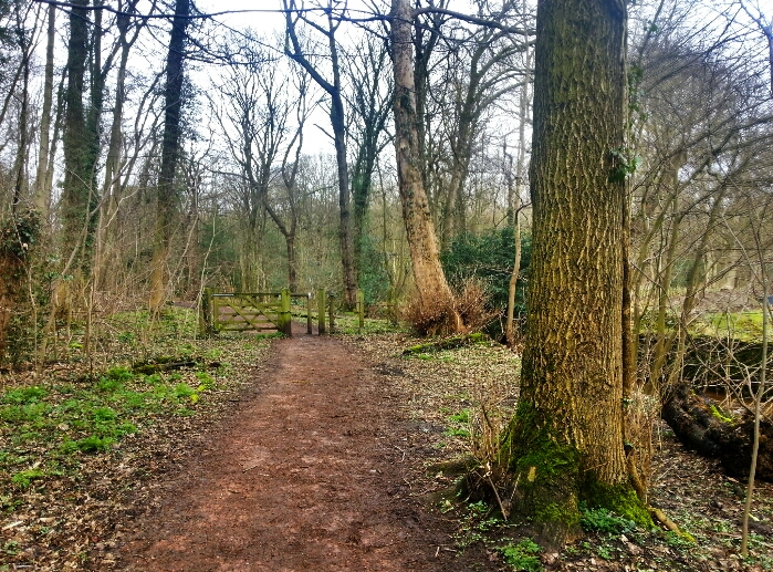 Path in Ecclesall woods.