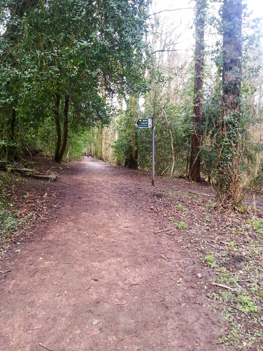 The Path in Ecclesall Woods towards Whirlow